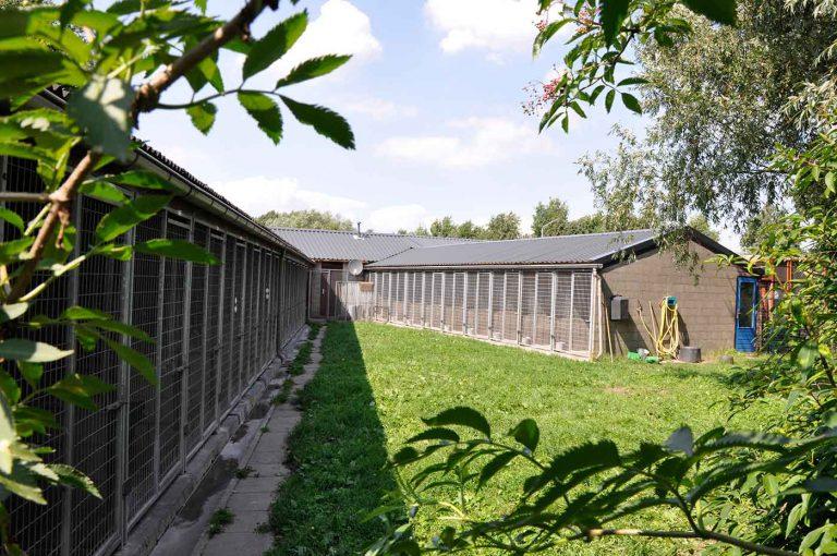 dpo dierenpension oosterhout buiten veld uitzicht grasveld opvang hondenpension dierenhotel dierenopvang
