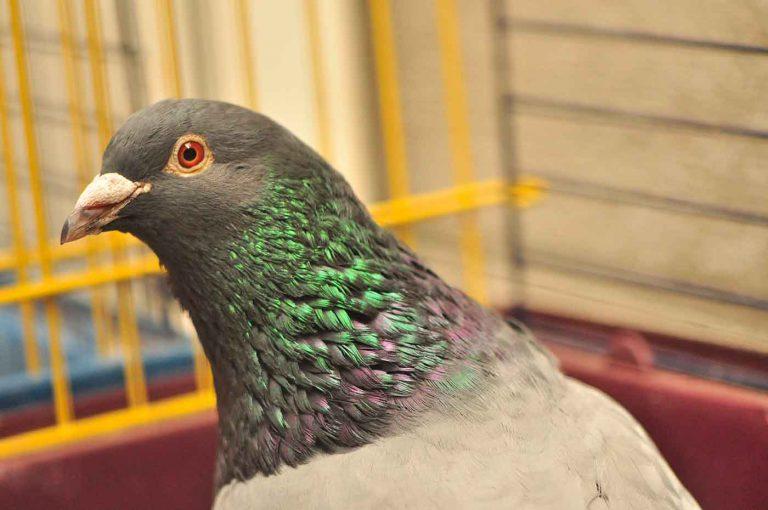 dpo dierenpension oosterhout duif vogel verblijf opvang dierenhotel dierenopvang