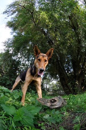 dpo dierenpension oosterhout hond band hondenspeeltje boom spelen kijkt dierenhotel hondenpension dierenopvang