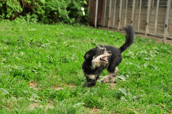 dpo dierenpension oosterhout hond boomer rennen buiten grass spelen dierenhotel hondenpension dierenopvang