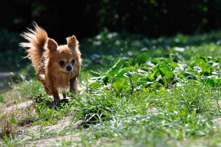 dpo dierenpension oosterhout hond chiwawa buiten dierenhotel hondenpension dierenopvang