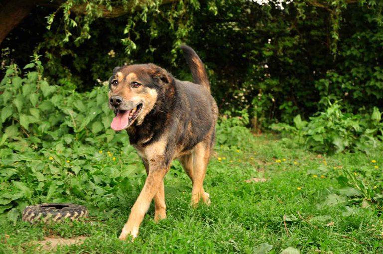dpo dierenpension oosterhout hond loopt buiten hondenspeeltje dierenhotel hondenpension dierenopvang