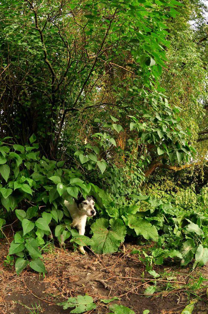 dpo dierenpension oosterhout hond parson russell terrier bossen dierenhotel hondenpension dierenopvang