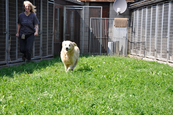dpo dierenpension oosterhout hond rennen buiten speelwei golden retriever dierenhotel hondenpension dierenopvang