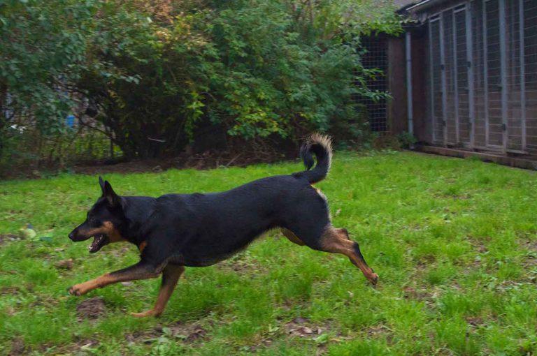 dpo dierenpension oosterhout hond rennen speelveld dierenhotel hondenpension dierenopvang bezoeker