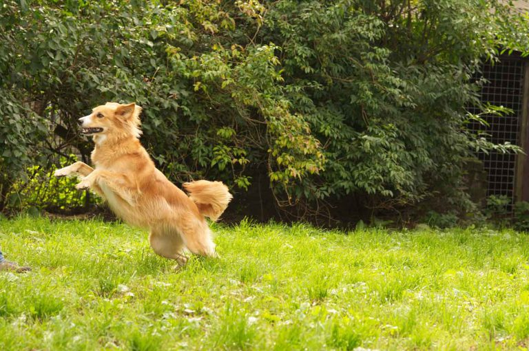 dpo dierenpension oosterhout hond springt speelweide dierenhotel hondenpension dierenopvang