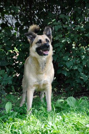 dpo dierenpension oosterhout hond staat kijkt struiken gras buiten dierenhotel hondenpension dierenopvang