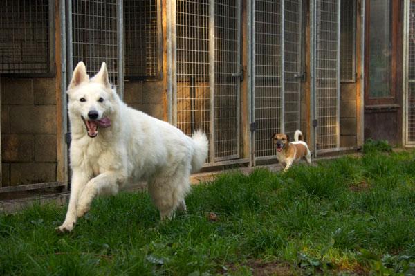 dpo dierenpension oosterhout honden rennen jack russell speelwei spelen buiten dierenhotel hondenpension dierenopvang
