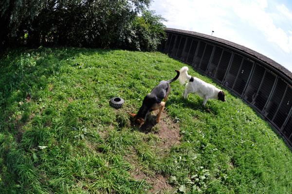 dpo dierenpension oosterhout honden speelwei speeldplaats drentse patrijshond dierenhotel hondenpension dierenopvang