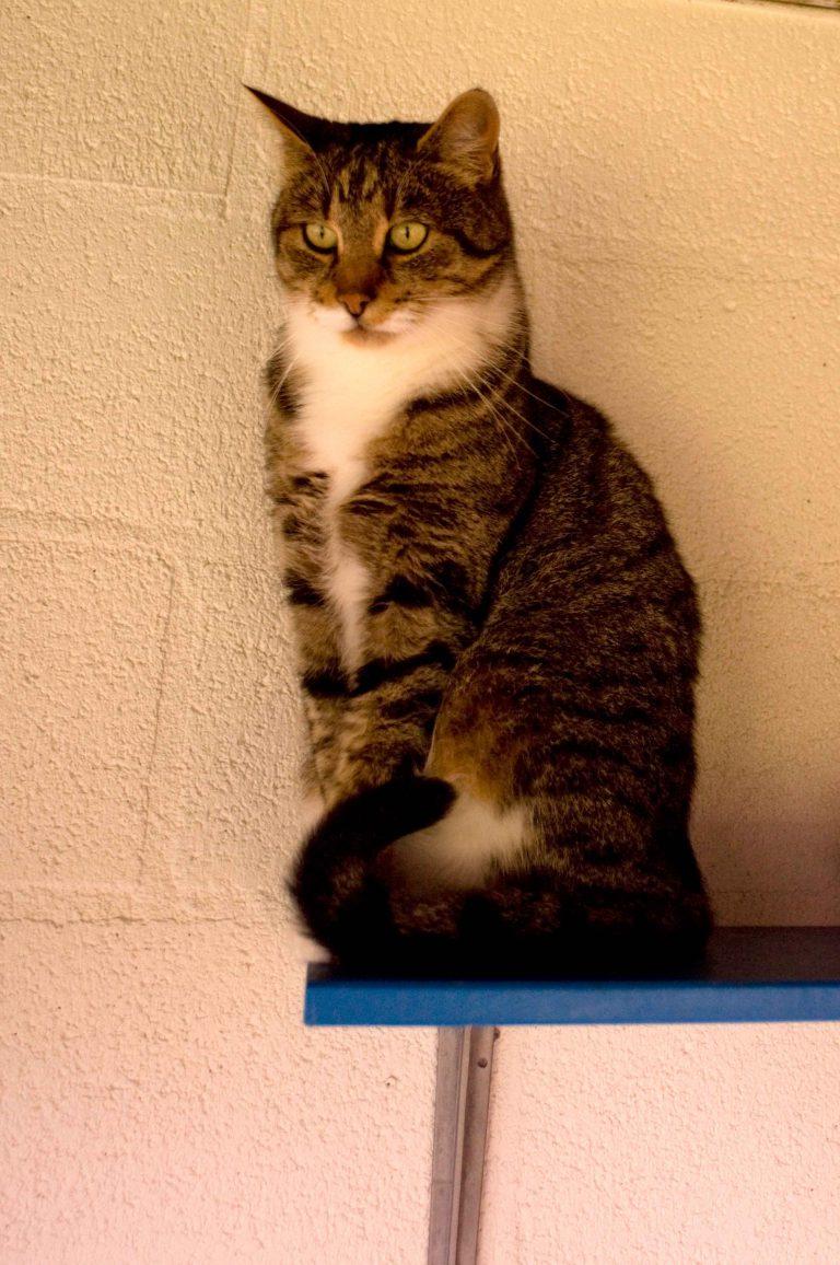 dpo dierenpension oosterhout kat buitenverblijf zit dierenhotel kattenpension dierenopvang