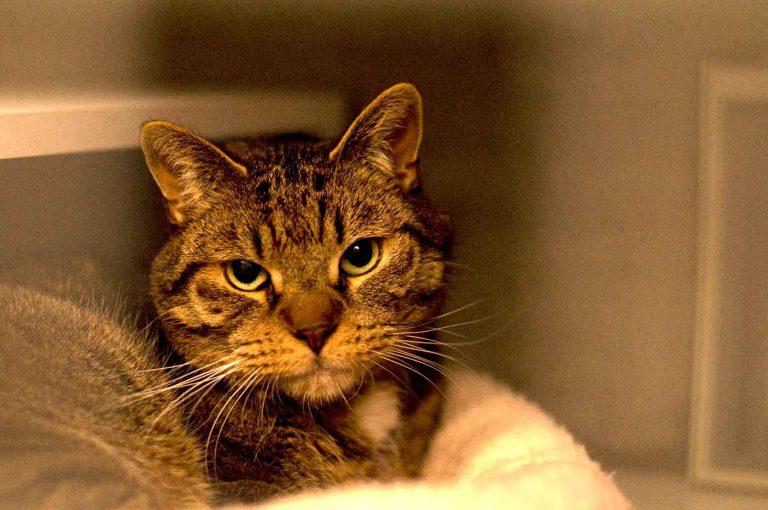 dpo dierenpension oosterhout kat kater binnen kijkt dierenhotel kattenpension dierenopvang