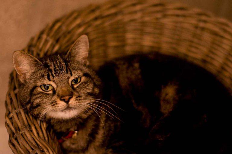 dpo dierenpension oosterhout kat kattenmand poes hotel dierenhotel kattenpension dierenopvang