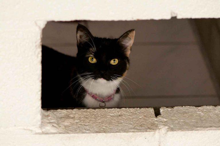 dpo dierenpension oosterhout kat kijkt door opening dierenhotel kattenpension dierenopvang