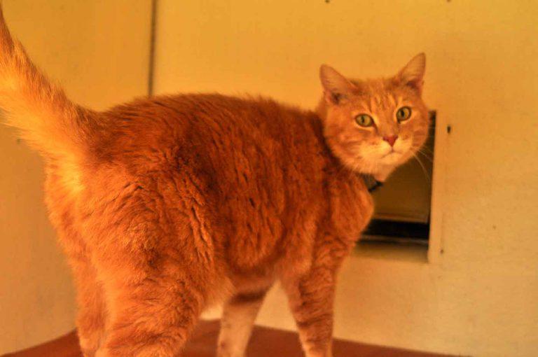 dpo dierenpension oosterhout kat kijkt staat hok dierenhotel kattenpension dierenopvang