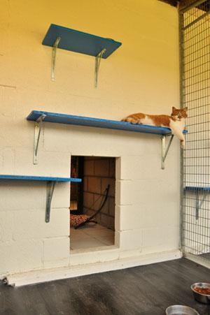 dpo dierenpension oosterhout kat ligt kater buitenverblijf plankjes dierenhotel kattenpension dierenopvang