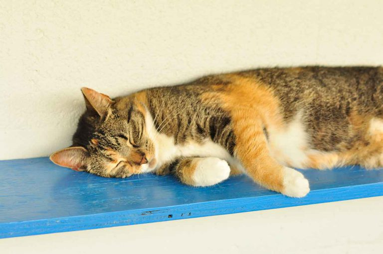 dpo dierenpension oosterhout kat ligt lapjes plank rustig ierenhotel kattenpension dierenopvang
