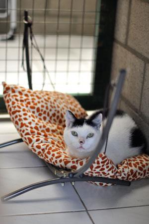 dpo dierenpension oosterhout kat ligt mandje hangmat binnenverblijf dierenhotel kattenpension dierenopvang