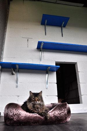 dpo dierenpension oosterhout kat ligt mandje lapjes buiten verblijf mainecoon dierenhotel kattenpension dierenopvang