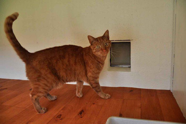 dpo dierenpension oosterhout kat rode dierenhotel kattenpension dierenopvang