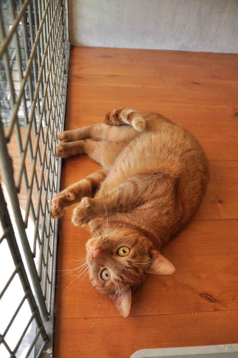 dpo dierenpension oosterhout kat rode ligt kijkt verblijf ierenhotel kattenpension dierenopvang