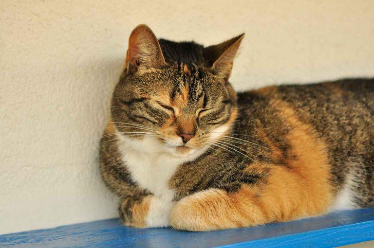 dpo dierenpension oosterhout kat slaapt ligt plankje dierenhotel kattenpension dierenopvang