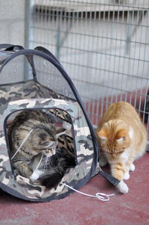 dpo dierenpension oosterhout kat spelen touw katten tent dierenhotel kattenpension dierenopvang