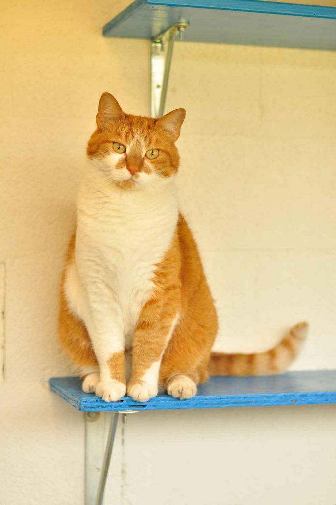 dpo dierenpension oosterhout kat zit buiten plankje hotel kattenpension dierenhotel dierenopvang