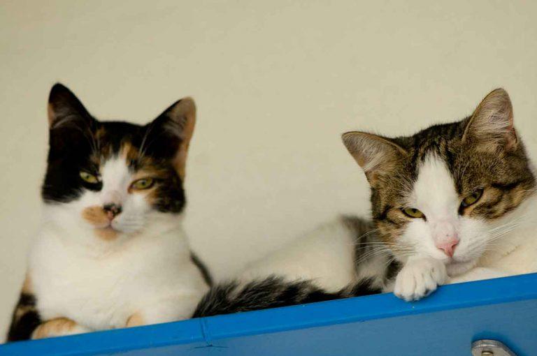 dpo dierenpension oosterhout katten lijken zitten plankje dierenhotel kattenpension dierenopvang
