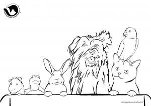 dpo dierenpension oosterhout kleurplaat totziens hond kat vogel konijn schilpad cavia