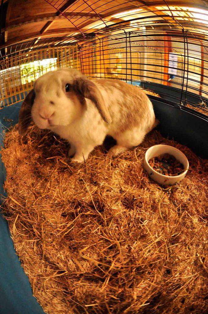 dpo dierenpension oosterhout konijn hangoor hok verblijf dierenhotel dierenopvang
