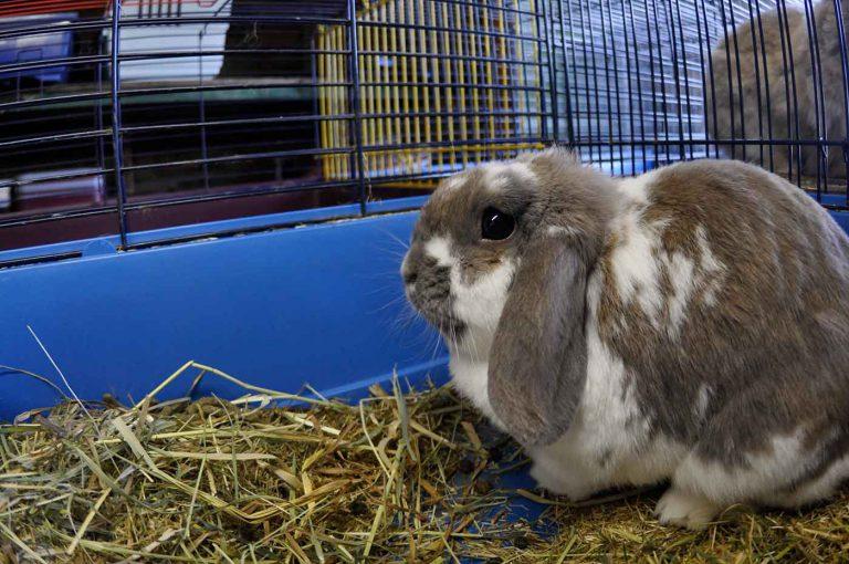 dpo dierenpension oosterhout konijn hok bezoeker hangoor dierenhotel dierenopvang
