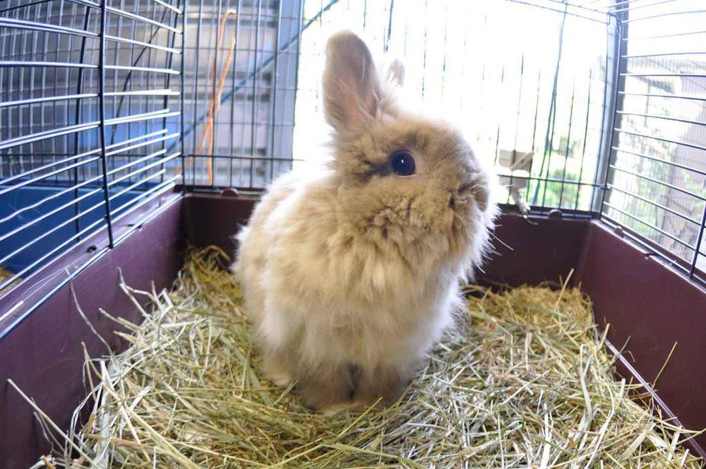 dpo dierenpension oosterhout konijn langhaar kijkt hok dierenhotel dierenopvang