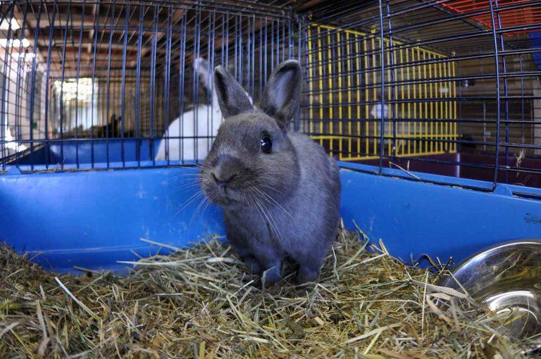 dpo dierenpension oosterhout konijnen knaagdieren kooi dierenhotel dierenopvang
