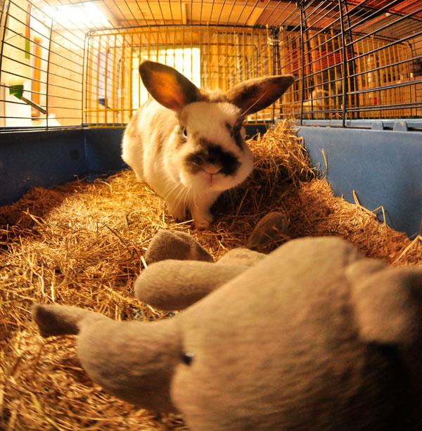 dpo dierenpension oosterhout konijnen knaagdieren kooi olifant dierenhotel dierenopvang