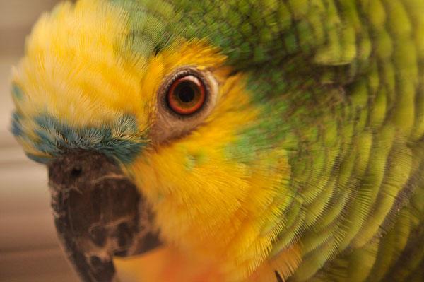dpo dierenpension oosterhout vogel groen kooi verblijf hok amazon papagei dierenhotel dierenopvang