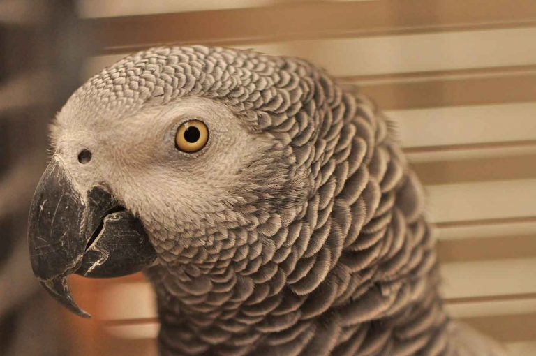 dpo dierenpension oosterhout vogel kop verblijf kijkt grijze roodstaart dierenhotel dierenopvang