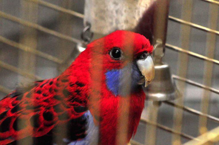 dpo dierenpension oosterhout vogel rosella rood kooi verblijf hok dierenhotel dierenopvang