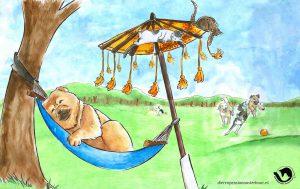 dpo dierenpension oosterhout wallpaper hangmat kat hond boom