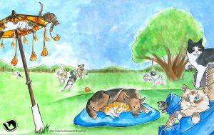 dpo dierenpension oosterhout wallpaper speelen hond kat spelen buiten