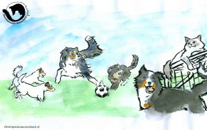 dpo dierenpension oosterhout wallpaper hond voetbal kat